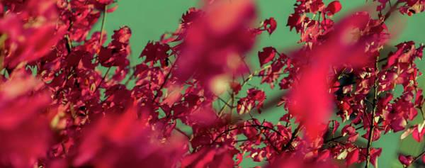 Photograph - Autumn Colors V by Anne Leven