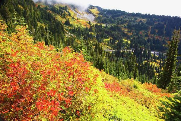 Autumn Colours On Mount Rainier, In Mt Art Print