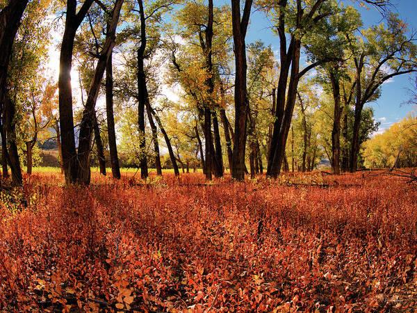 Photograph - Autumn Cottonwood Sanctuary by Leland D Howard
