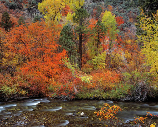 Photograph - Autumn Creek by Leland D Howard