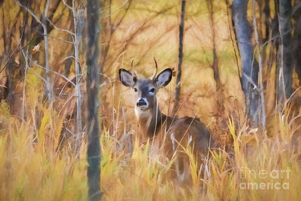 Photograph - Autumn Deer by Lori Dobbs