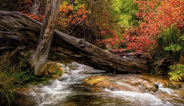 Photograph - Autumn Dogwoods by TL Mair