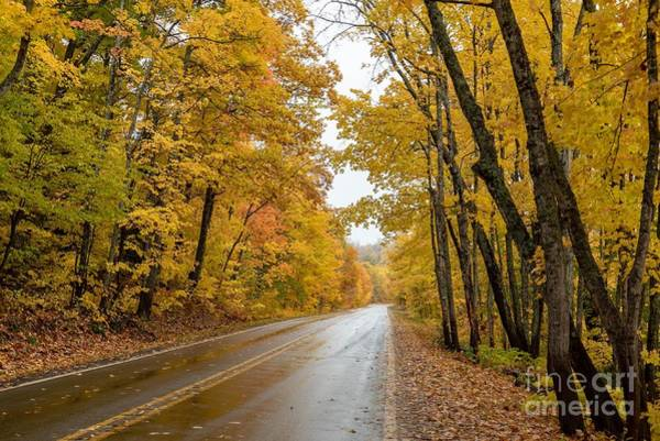 Photograph - Autumn Drive by Susan Rydberg