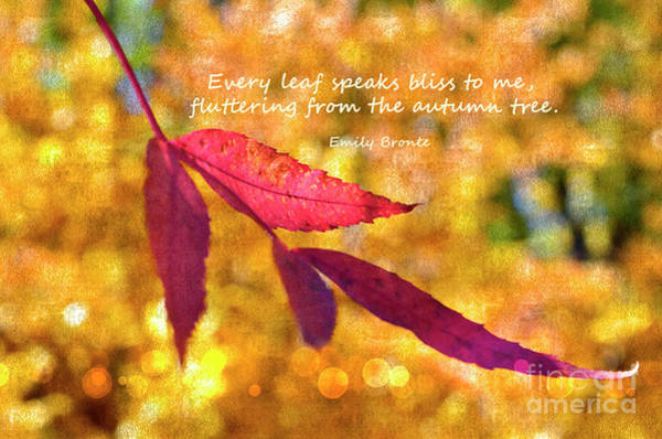 Wall Art - Photograph - Autumn Emily Bronte by Debby Pueschel