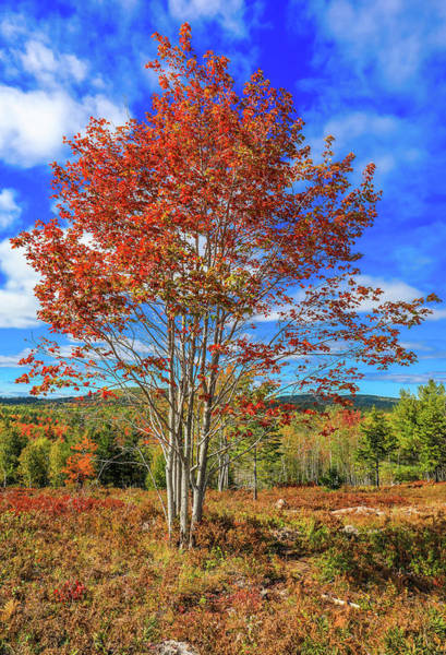 Wall Art - Photograph - Autumn Enters Acadia National Park by Dan Sproul