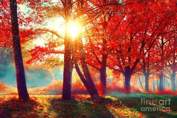 Autumnal Wall Art - Photograph - Autumn. Fall Scene. Beautiful Autumnal by Subbotina Anna