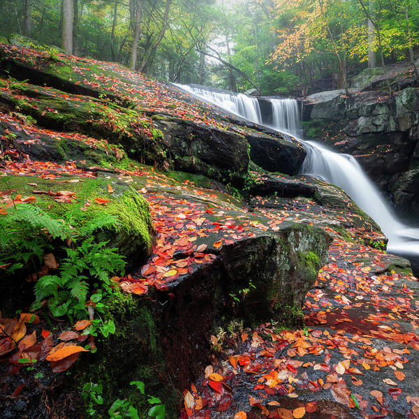 Photograph - Autumn Falling 3 Square by Bill Wakeley