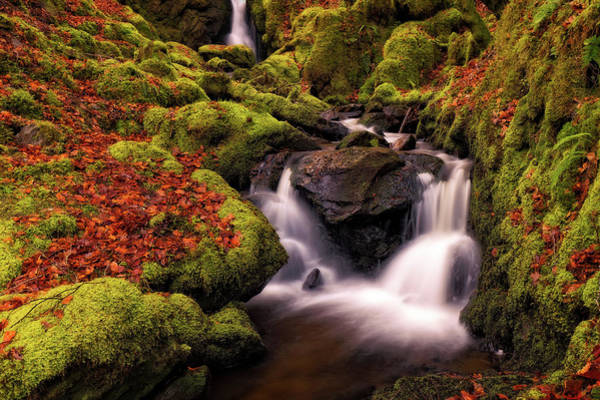 Art Print featuring the photograph Autumn Falls by Elliott Coleman