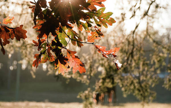 Photograph - Autumn Feelings 3 by Andrea Anderegg