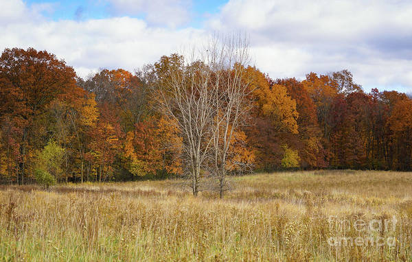 Photograph - Autumn Field And Forest by Rachel Cohen