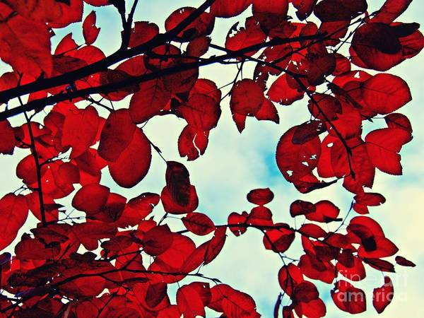 Wall Art - Photograph - Autumn Fire 1 by Sarah Loft