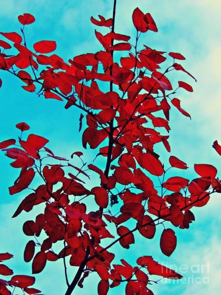 Wall Art - Photograph - Autumn Fire 2    by Sarah Loft