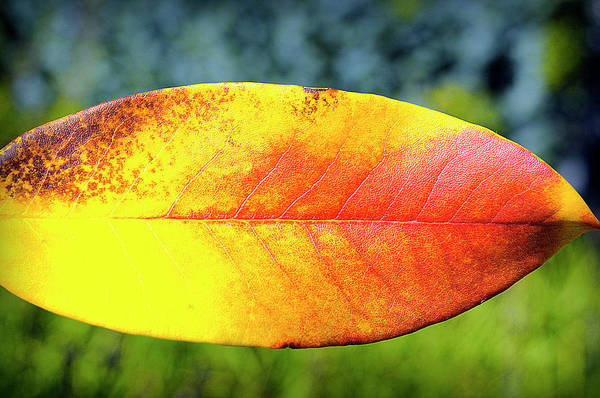 Photograph - Autumn Five by Tikvah's Hope