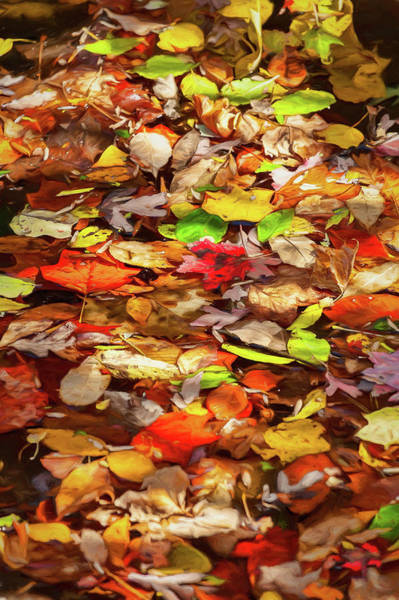 Wall Art - Digital Art - Autumn Floaters by Dan Carmichael