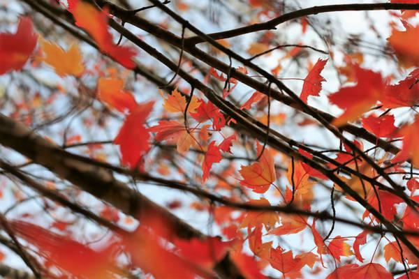 Photograph - Autumn Flurry by Ajp