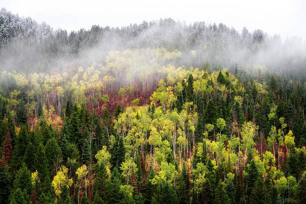 Photograph - Autumn Fog by Michael Ash