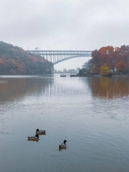 Photograph - Autumn Fog by Shannon Kelly