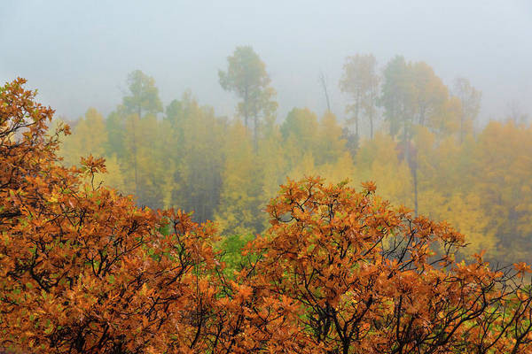Photograph - Autumn Foggy Day by John De Bord