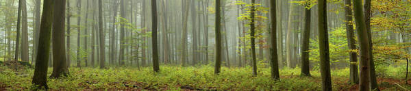 Wall Art - Photograph - Autumn Foggy Forest by Ralph Oechsle