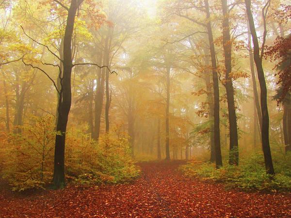 Ljubljana Wall Art - Photograph - Autumn Foggy Forest by Tas10