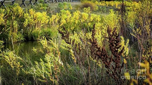 Photograph - Autumn Foliage Before Winter by Jon Burch Photography