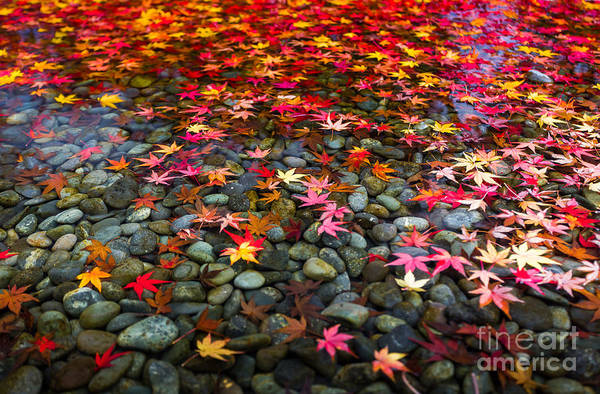 Famous Wall Art - Photograph - Autumn Foliage In Japan by Kanuman