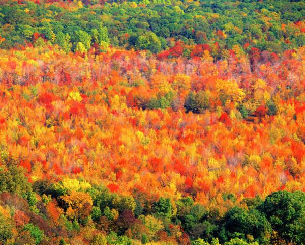 Wall Art - Photograph - Autumn Foliage by Tom Till