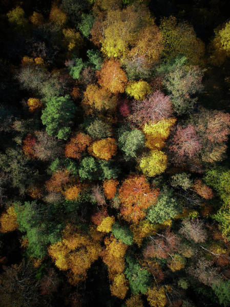 Foliage Photograph - Autumn Forest - Aerial Photography by Nicklas Gustafsson