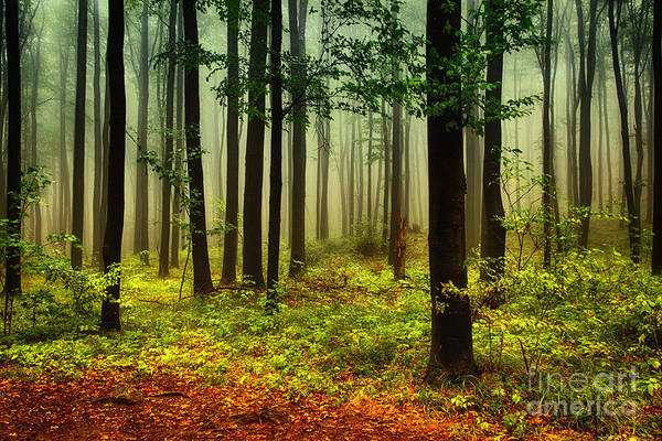 Rain Forest Wall Art - Photograph - Autumn Forest by Attila