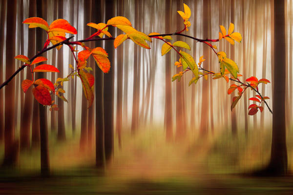 Photograph - Autumn Forest Dreamscape by Debra and Dave Vanderlaan