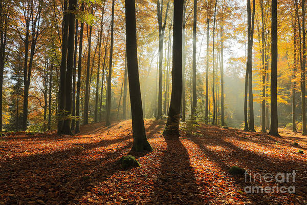 Wall Art - Photograph - Autumn Forest In North Poland.pomerania by Mateusz Liberra