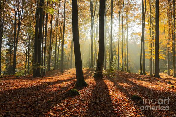 Wall Art - Photograph - Autumn Forest In North Poland.pomerania by Mateusz Liberra