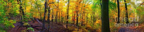 Photograph - Autumn Forest In Panoramic View  by Christopher Shellhammer