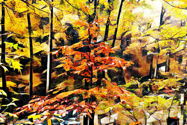 Photograph - Autumn Forest Leaves Abstract by Debra and Dave Vanderlaan