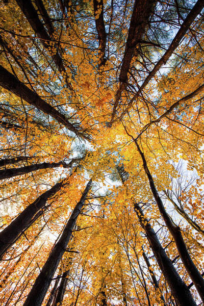 Photograph - Autumn Forest by Robert Clifford