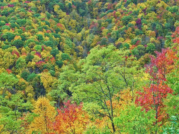 Photograph - Autumn Forest, Steestachee Bald by