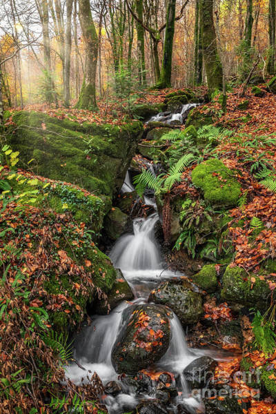Wall Art - Photograph - Autumn Forest Stream by Adrian Evans