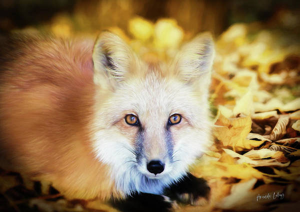 Woodland Animals Mixed Media - Autumn Fox by Amanda Lakey