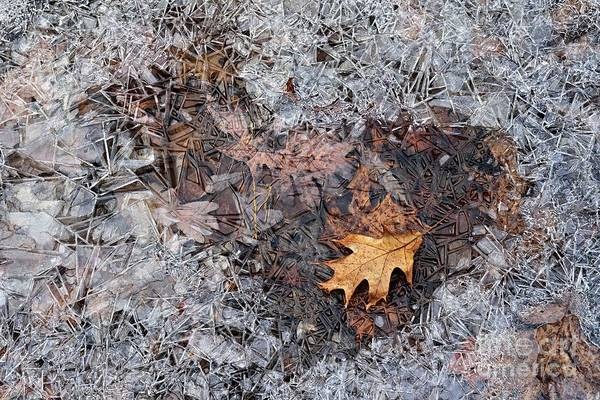 Photograph - Autumn Freezing Over by Larry Ricker