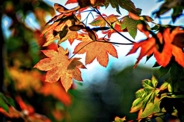 Photograph - Autumn Fun by Bill Posner