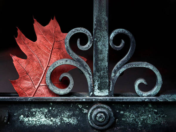 Photograph - Autumn Gate by Josh Eral