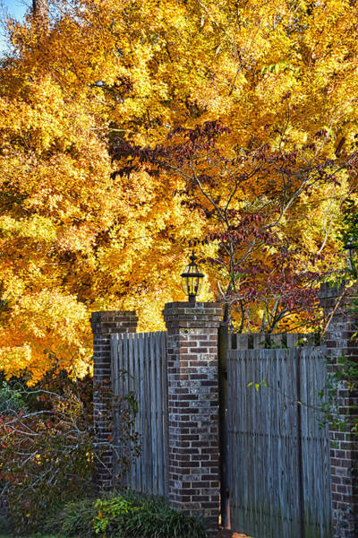Wall Art - Photograph - Autumn Glory by Linda Brown