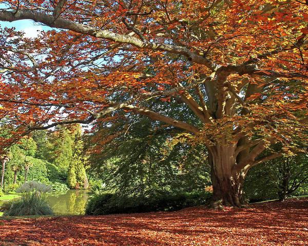 Photograph - Autumn Glow by Gill Billington