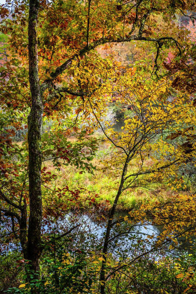 Photograph - Autumn Gold Inspiration by Debra and Dave Vanderlaan