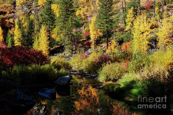 Wall Art - Photograph - Autumn Gold by Mike Dawson