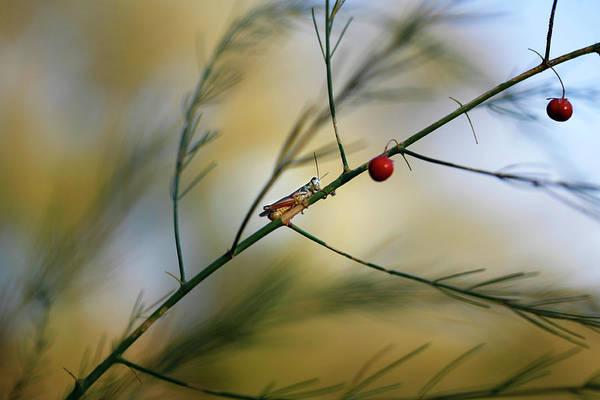 Photograph - Autumn Grasshopper by Marilyn Hunt