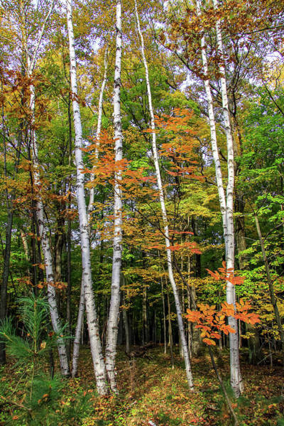 Autumn Grove, Vertical Art Print