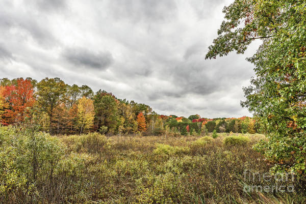 Photograph - Autumn Has Been Found In Michigan by Sue Smith