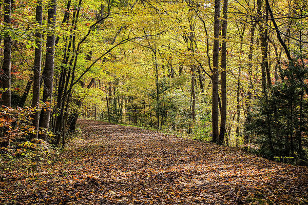 Photograph - Autumn Haze by Dale R Carlson
