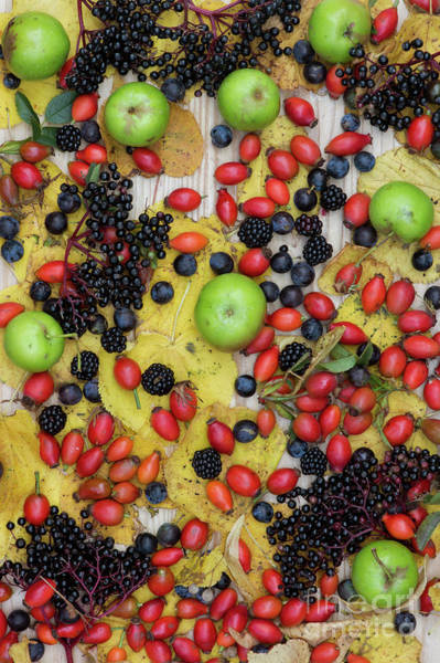 Photograph - Autumn Hedgrow Fruits by Tim Gainey
